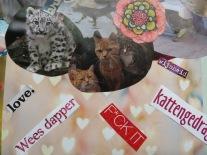 'be brave', 'cat behavior', wisdom'